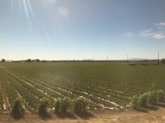 9 - Farms