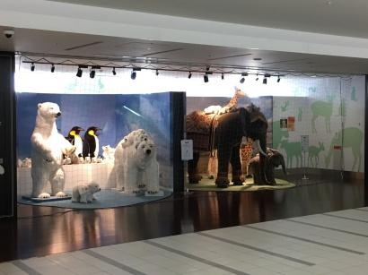 Steiff bear display heading to International terminal
